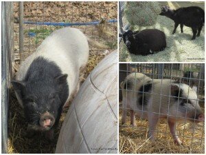 Parker County Impounded Livestock Auction - Online Only